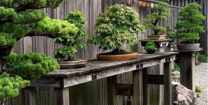 Bonsai Taman, sumber : BenniSobekti.com