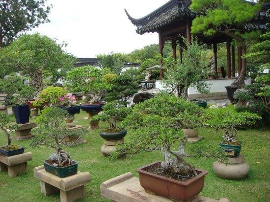 Bonsai di Taman, sumber : Aneka Ragam Bentuk Bonsai